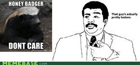 Honey Badger Badass