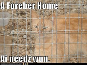 A Foreber Home  Ai needz wun.