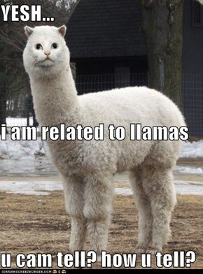 YESH... i am related to llamas u cam tell? how u tell?