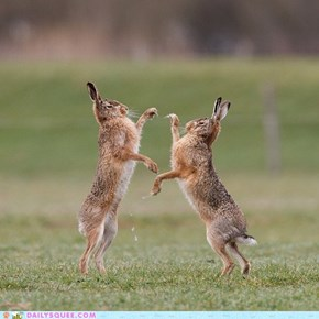 Acting Like Animals CLASSIC: A Hare-Raising Experience