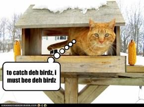 to catch deh birdz, i must bee deh birdz