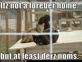 Itz not a foreber home...  but at least derz noms.