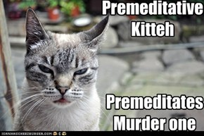 Premeditative kitteh