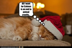 All I want for Catmas is an end to animal cruelty...