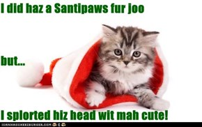 I did haz a Santipaws fur joo but... I splorted hiz head wit mah cute!