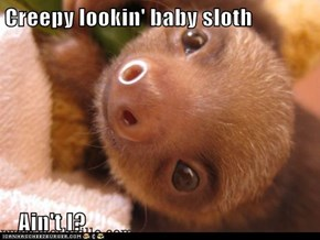 Creepy lookin' baby sloth     Ain't I?