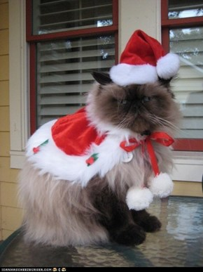 Advent Kitteh of teh Day: And a Merry #$&%ing Christmas to You Too, Buddy!