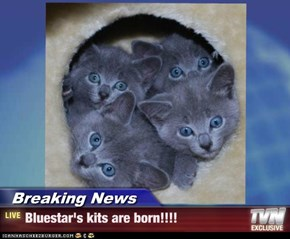 Breaking News - Bluestar's kits are born!!!!