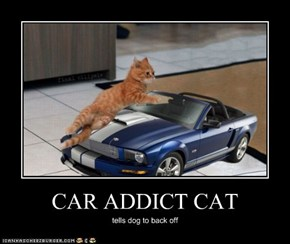 CAR ADDICT CAT