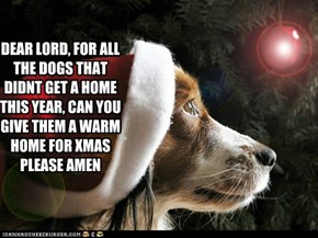 DEAR LORD, FOR ALL THE DOGS THAT DIDNT GET A HOME THIS YEAR, CAN YOU GIVE THEM A WARM HOME FOR XMAS PLEASE AMEN