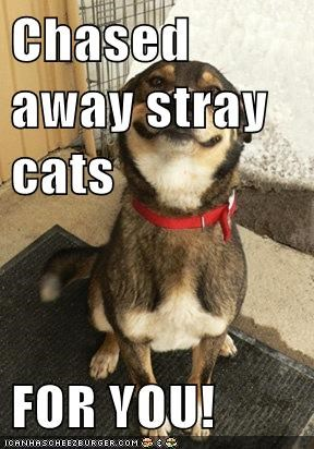 Chased away stray cats  FOR YOU!