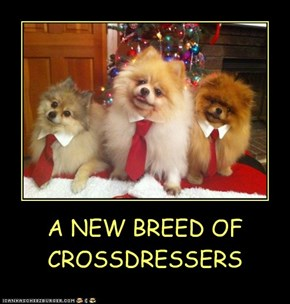 A NEW BREED OF CROSSDRESSERS