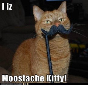 I iz  Moostache Kitty!