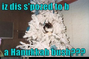 iz dis s'pozed to b  a Hanukkah bush???