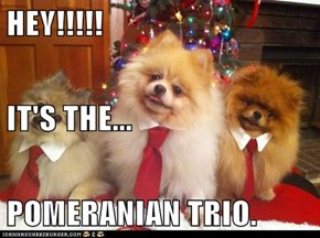HEY!!!!! IT'S THE... POMERANIAN TRIO.