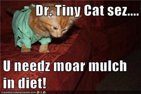 Dr. Tiny Cat sez....  U needz moar mulch in diet!