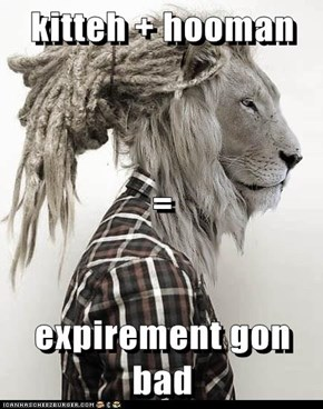 kitteh + hooman  = expirement gon bad