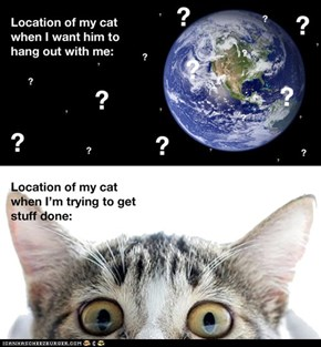 Where Is Your Cat Right Now?