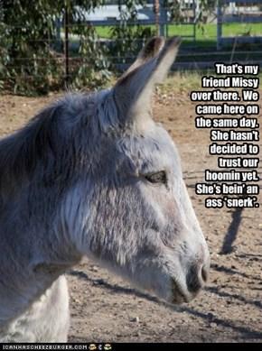 Adopt a Wild Horse or Burro