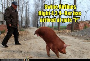 Swine Airlines, When Pigs Fly, They Fly Swine
