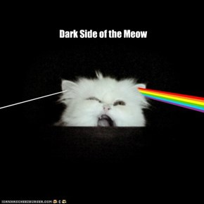 Dark Side of the Meow