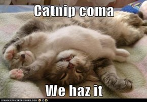 Catnip coma  We haz it