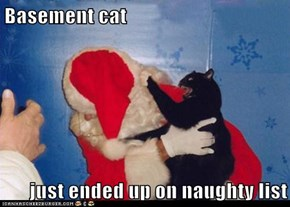 Basement cat  just ended up on naughty list