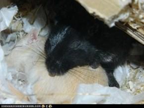 Snuggle Time!