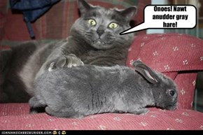 Moral Gray Area kitteh meets Punny Wabbit.