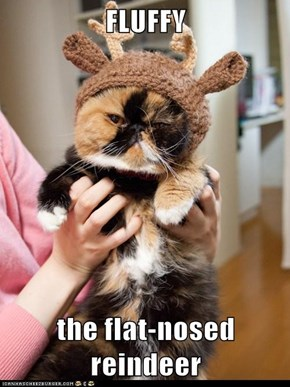 FLUFFY  the flat-nosed reindeer