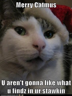 Merry Catmus  U aren't gonna like what u findz in ur stawkin