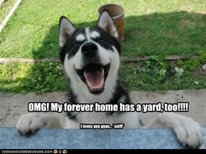 Forever yard....