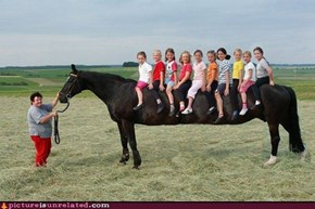 Say Hello to the Limousine Horse ....