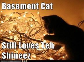 Basement Cat  Still Loves Teh Shineez