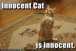 Innocent Cat  is innocent.