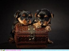 Two Kinds of Treasure