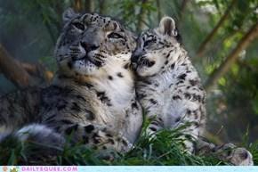 Like Mother, Like Baby