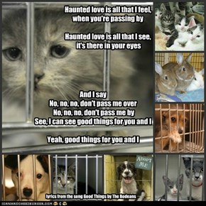 Shelter animals need you. Please adopt, don't buy