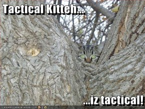 Tactical Kitteh...  ...iz tactical!