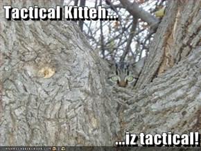 Tactical Kitteh...  ...iz tactical!