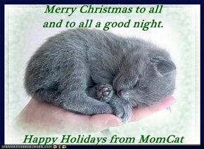 Merry Christmas to all                          and to all a good night.  Happy Holidays from MomCat