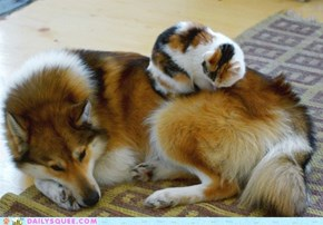 Interspecies Love: Two of a Kind