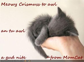 Meowy Crismuss to awl an tu awl a gud nite            ~from MomCat