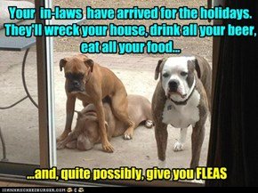 Your  in-laws  have arrived for the holidays. They'll wreck your house, drink all your beer,  eat all your food...
