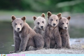 We're All Beary Good Friends