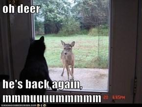 oh deer  he's back again, mmmuuuummmmm