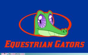 Equestrian Gators