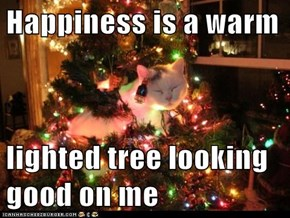 Happiness is a warm  lighted tree looking good on me