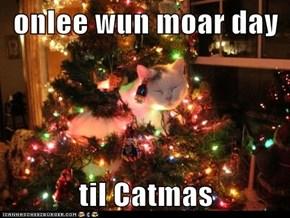 onlee wun moar day  til Catmas