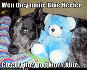 Wen they name Blue Heeler  Cleerly they not know blue